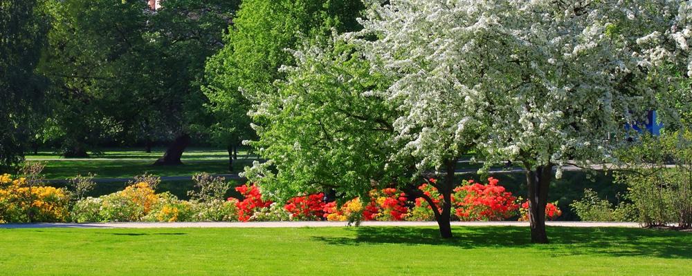 manutenzione parchi e aree verdi venezia